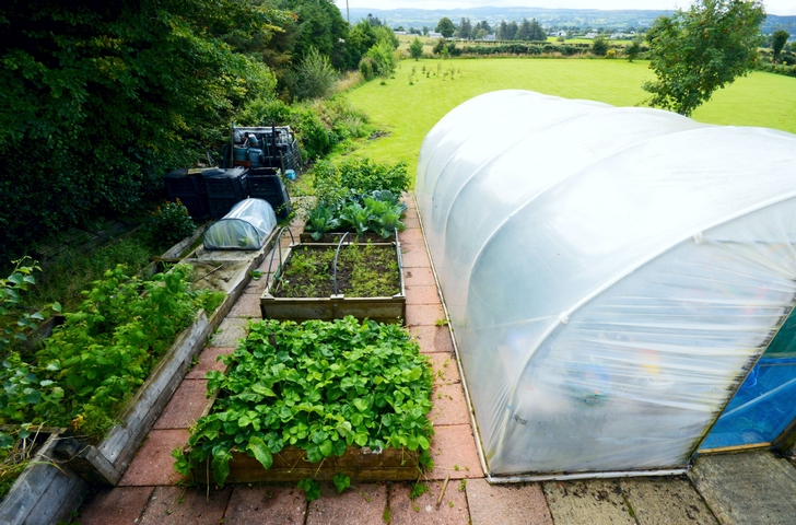 Polytunnel and Vegetable Beds