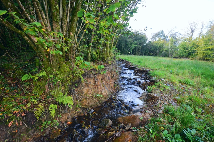 View of Stream